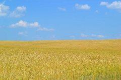 乌克兰政府将于10月份启动区块链土地登记试点项目
